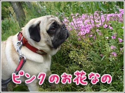 ピンクのお花と