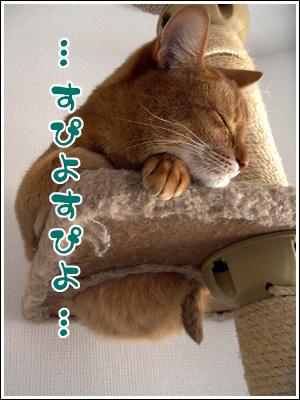 良い夢みろよ!