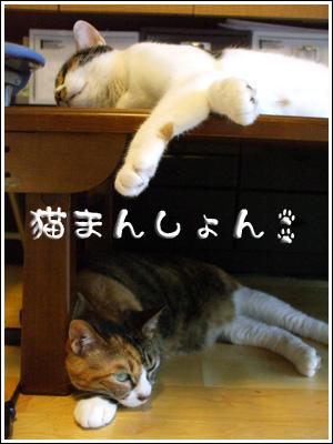 猫まんしょん