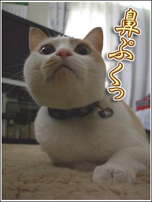 鼻ぷくぷく
